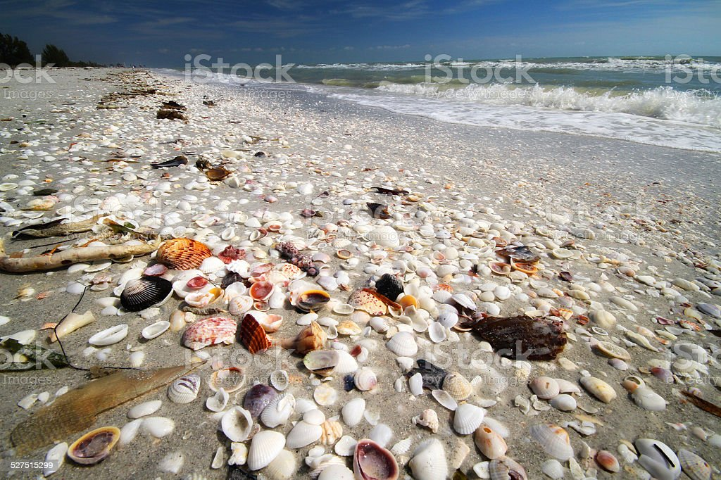 Sea Shells on beach stock photo