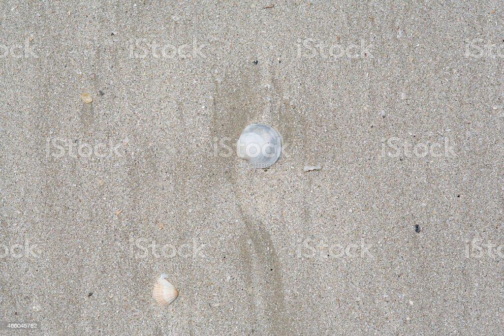 Sea shells on sand. Summer beach background stock photo