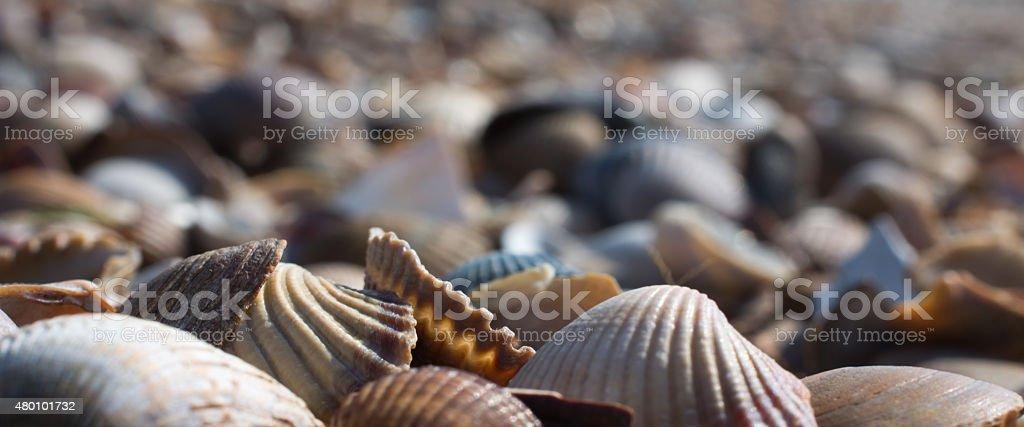 sea shells on the beach ground level stock photo