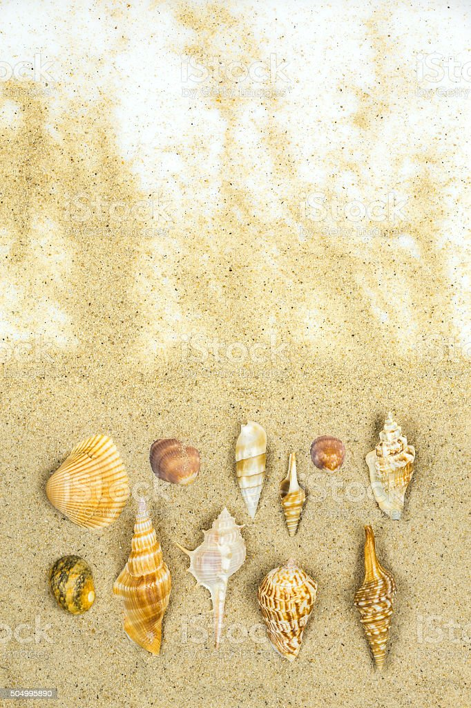 Sea shells on the yellow sand royalty-free stock photo