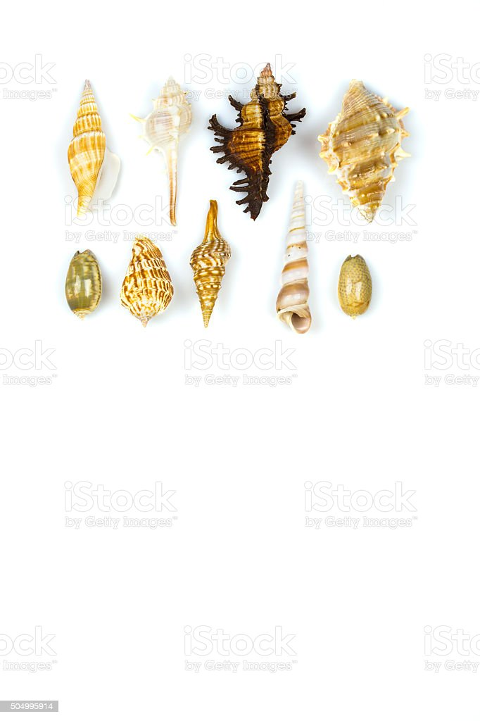 Sea shells on white background royalty-free stock photo