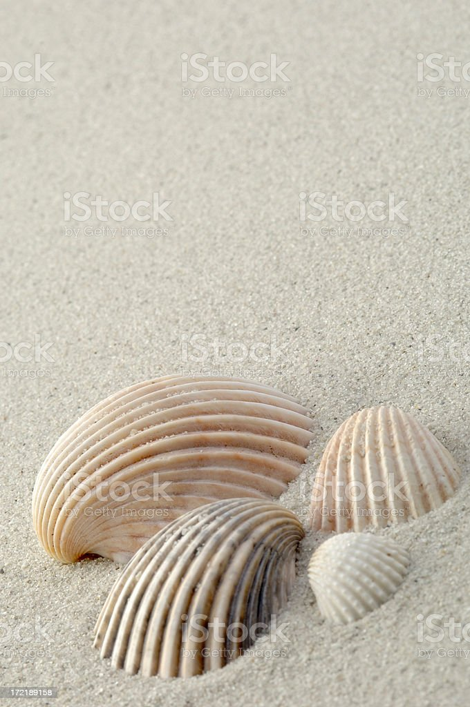 Sea Shells royalty-free stock photo