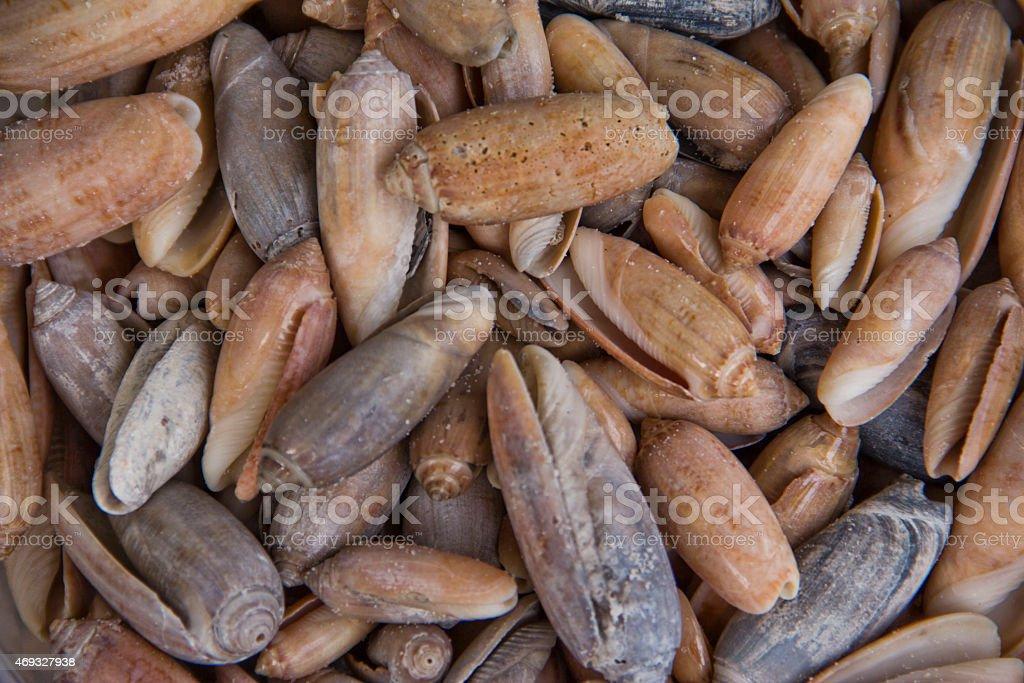 Sea Shells stock photo