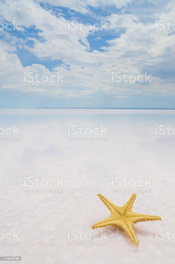 Sea shells starfish on tropical sand royalty-free stock photo