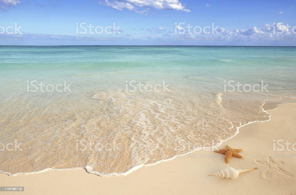 sea shells starfish tropical sand turquoise caribbean stock photo