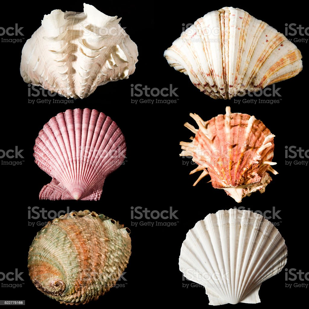 sea shells studio shot collection on black background stock photo
