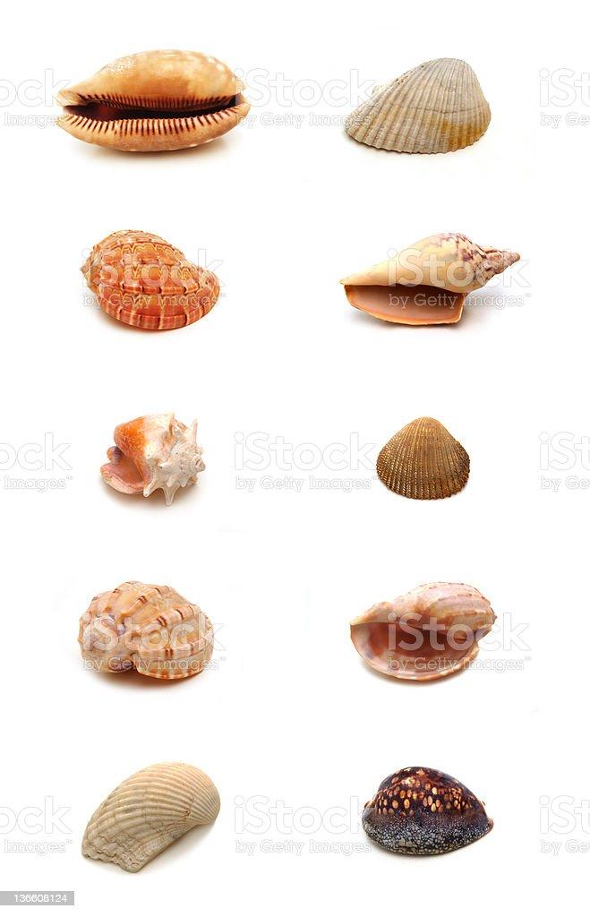 Sea shells - very big file stock photo
