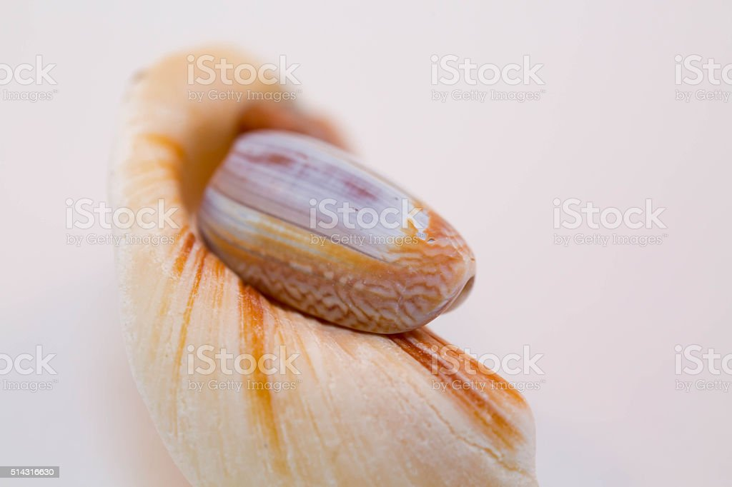 Sea shells & white background stock photo