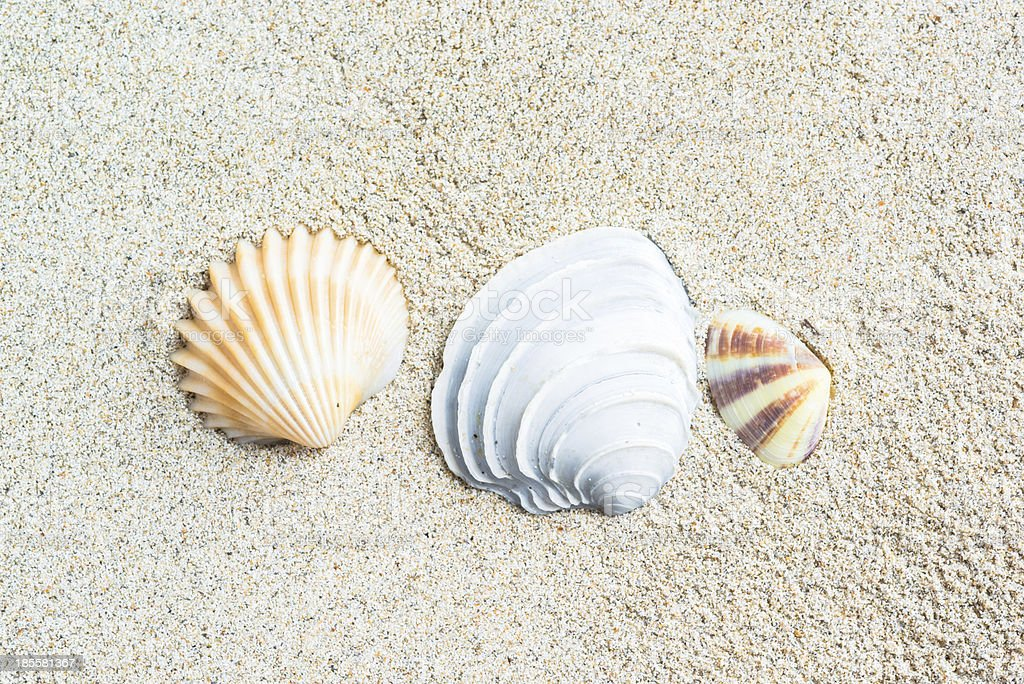 sea shells with sand as background royalty-free stock photo