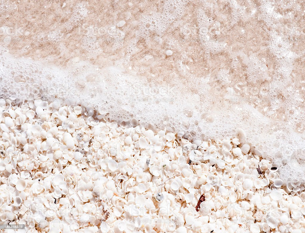 Sea Shore Shells royalty-free stock photo