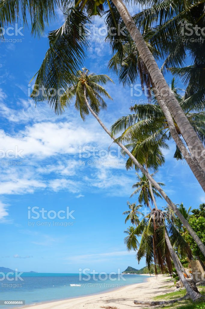 Sea shore with palm trees stock photo