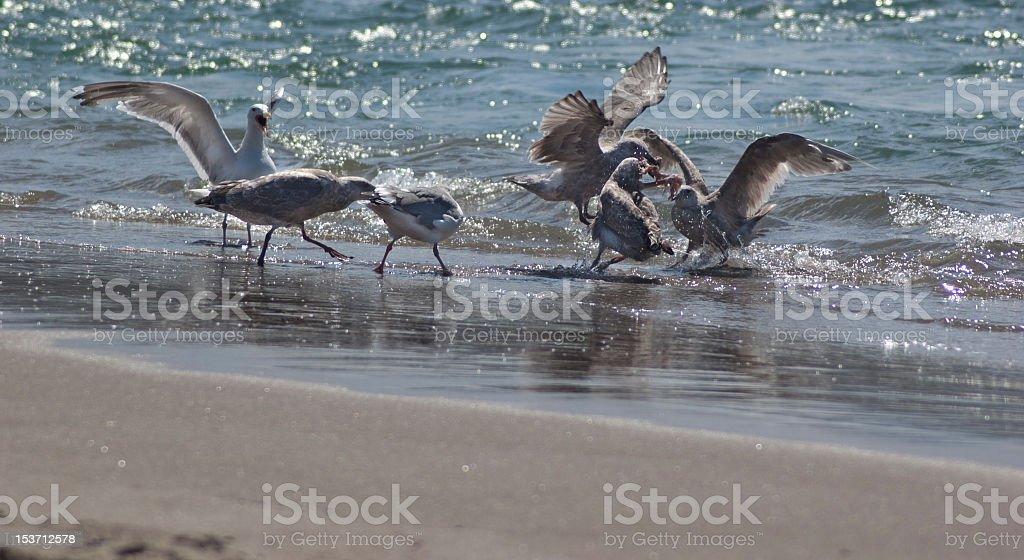 Sea Side Walka na jedzenie zbiór zdjęć royalty-free
