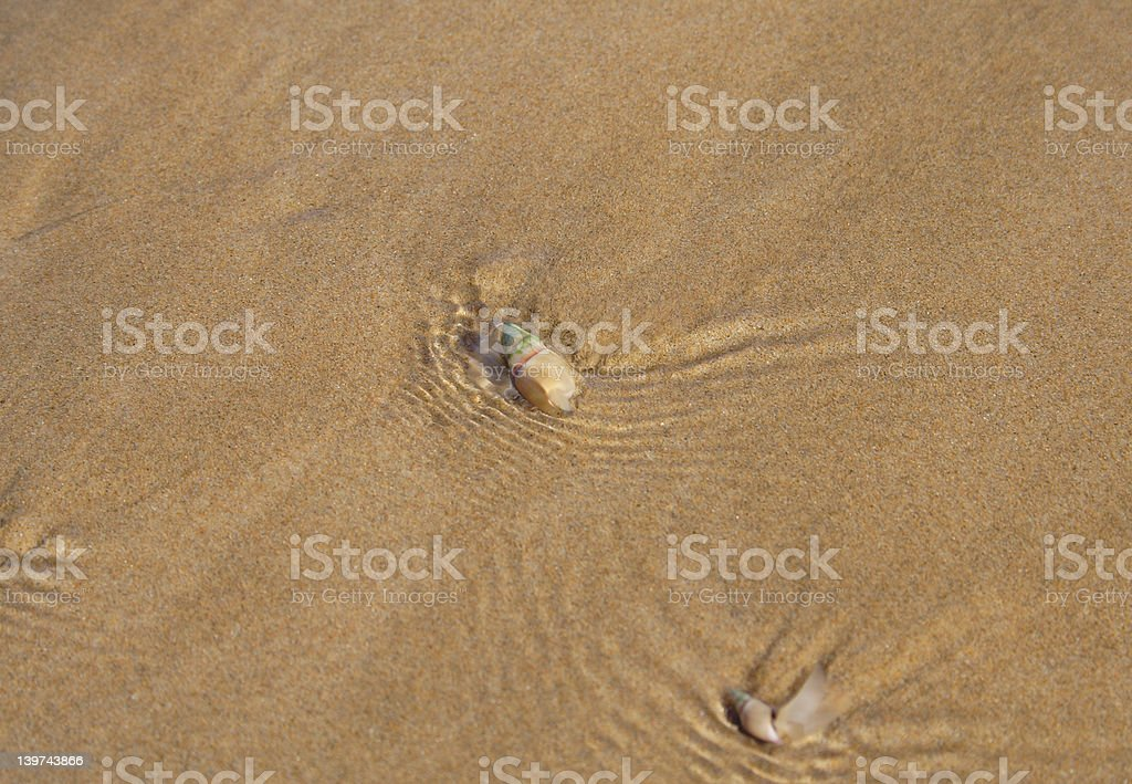 Sea snail in sand and water royalty-free stock photo