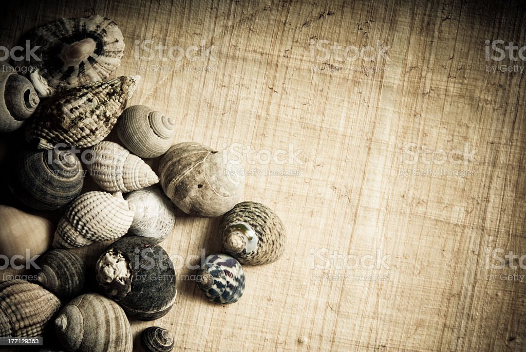 sea snails background royalty-free stock photo