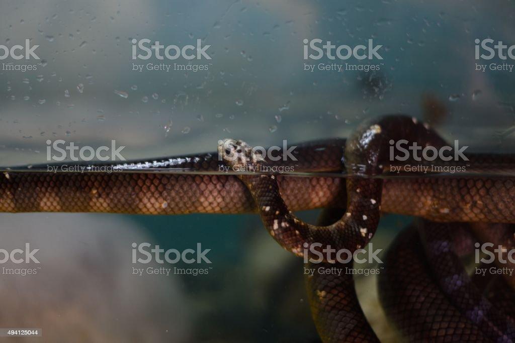Sea snake stock photo