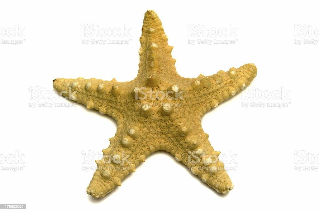 sea souvenir a starfish royalty-free stock photo