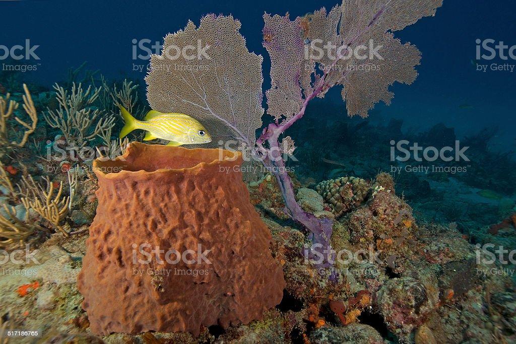 Sea Sponge and Coral Reef stock photo