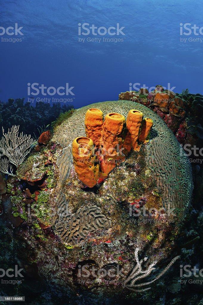 Sea Sponges stock photo