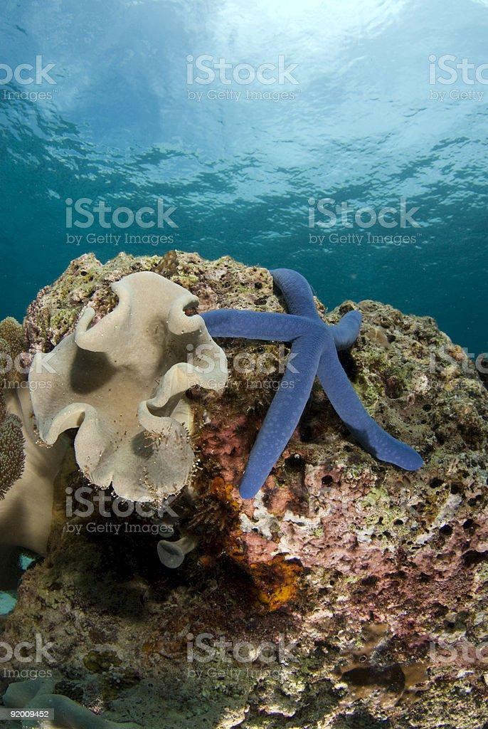 Sea Star and Coralhead Portrait royalty-free stock photo