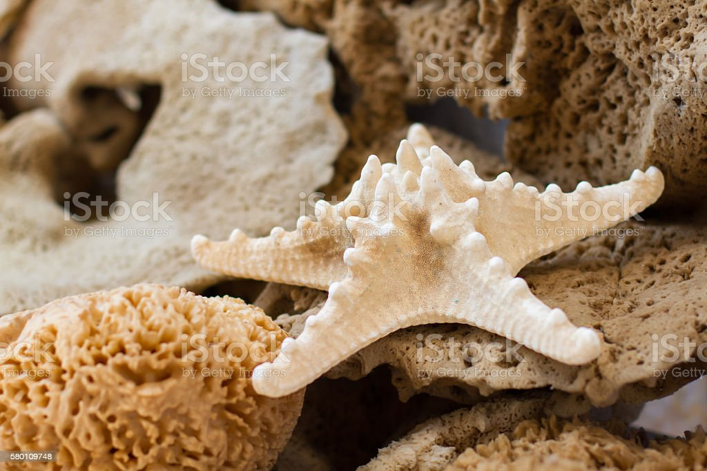 Sea star and sponges stock photo