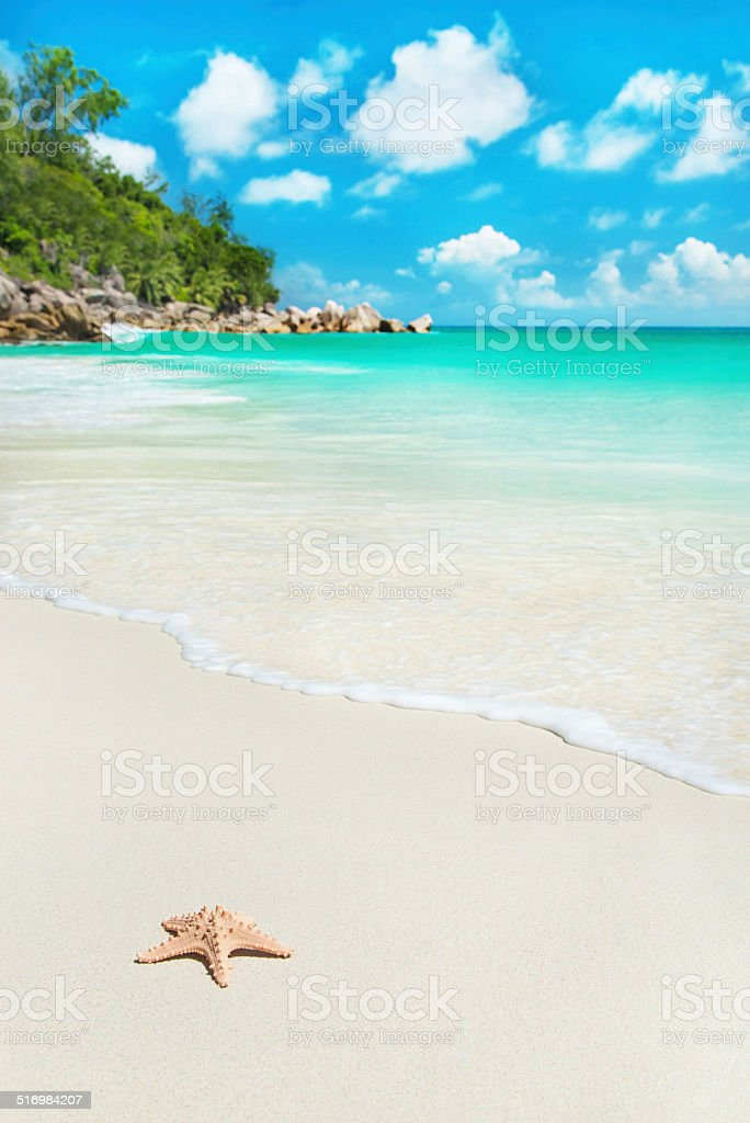 Sea star at tropical beach Anse Georgette, island Praslin, Seychelles stock photo