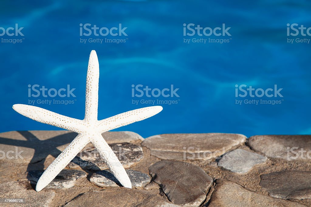 Sea star by blue swimming pool stock photo