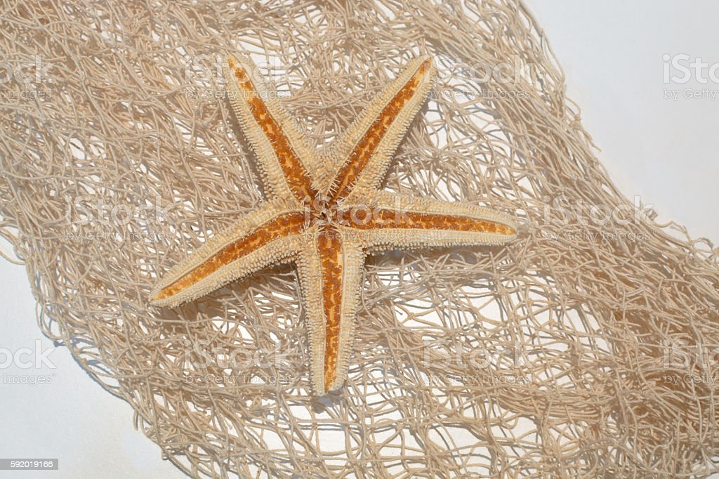 Sea star on a netting background stock photo
