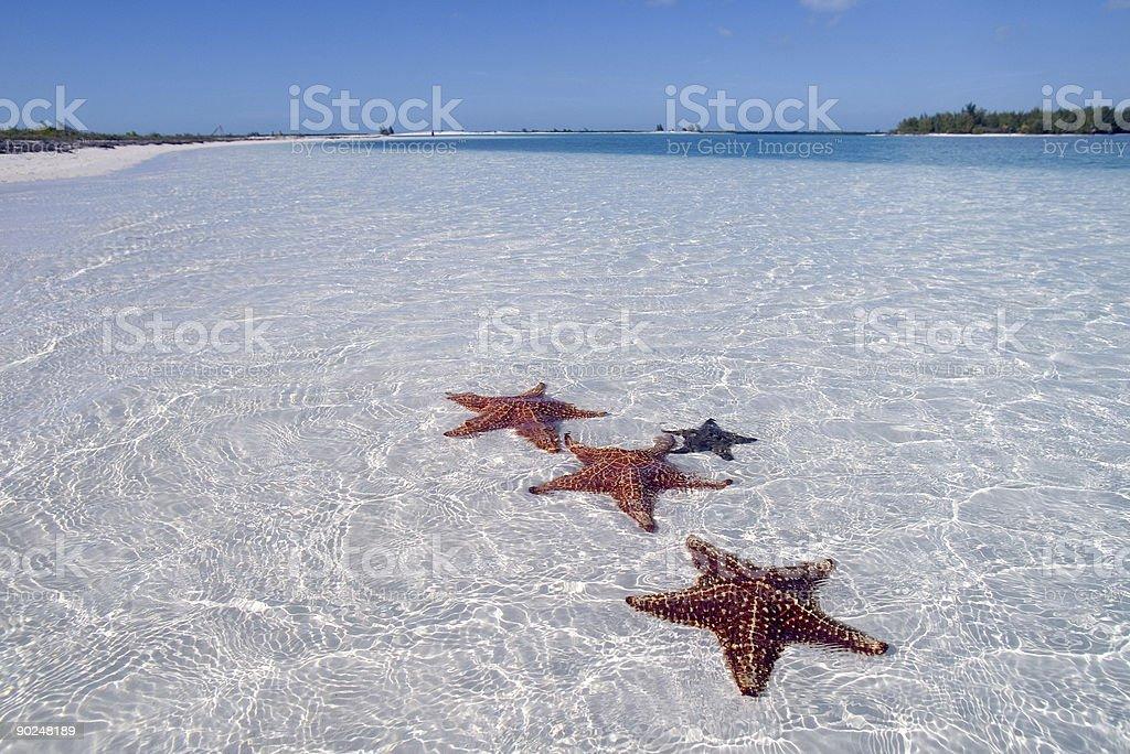 Sea star on the paradise beach stock photo