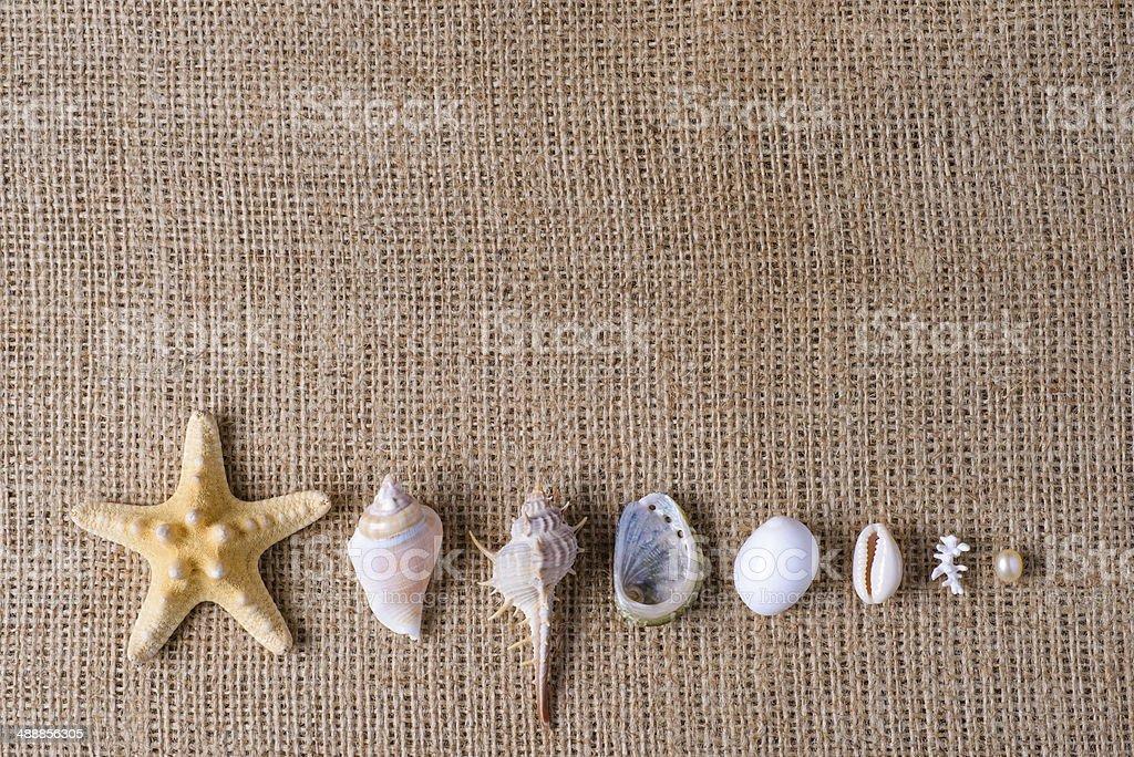 Sea still life royalty-free stock photo