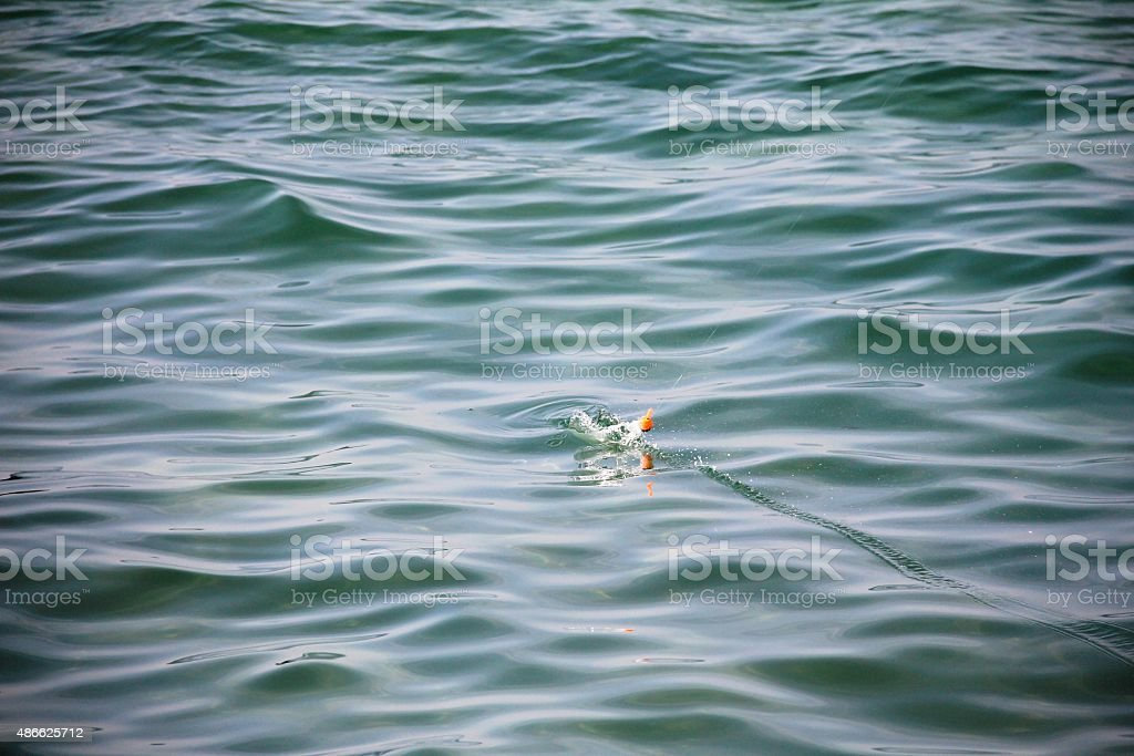 sea surface and red small float during fishing stock photo