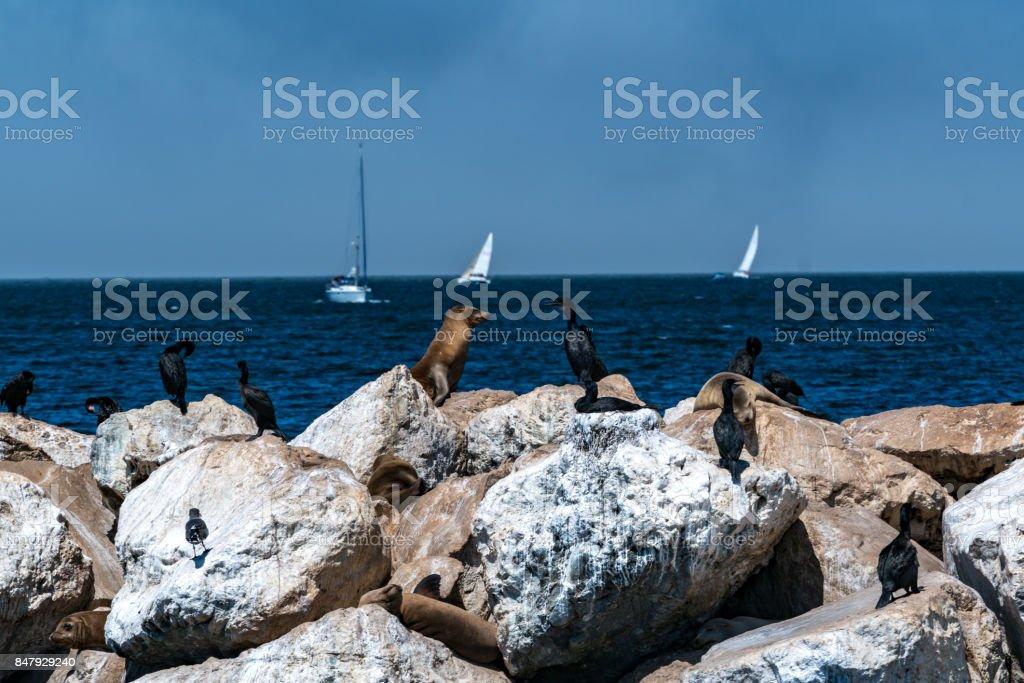 Sea Talk stock photo