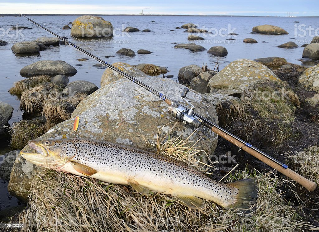 Sea trout fishing trophy royalty-free stock photo