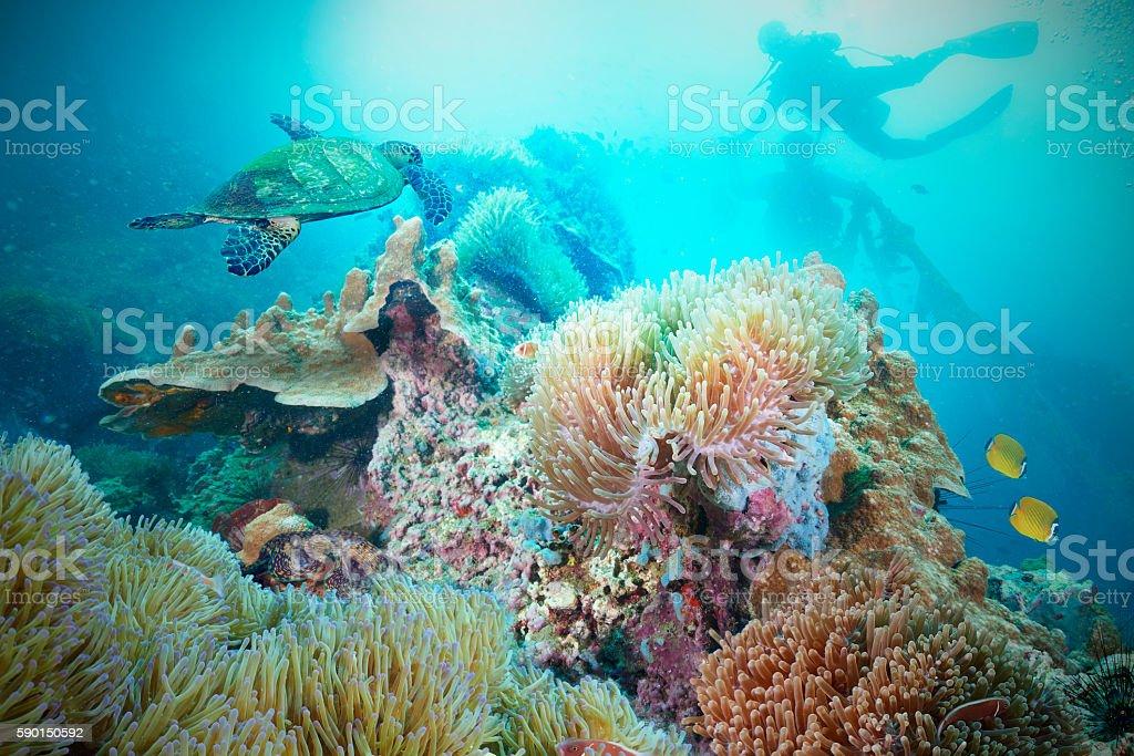Sea Turtle and  scuba diver stock photo