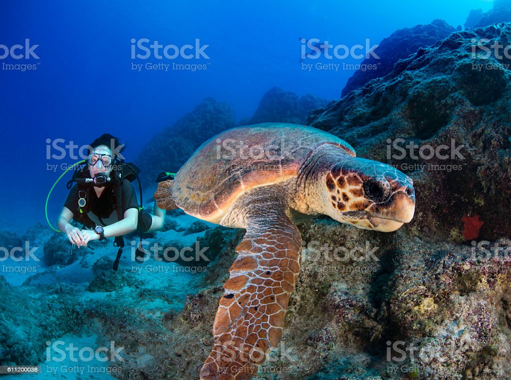 Sea turtle and scuba diver under water shot stock photo