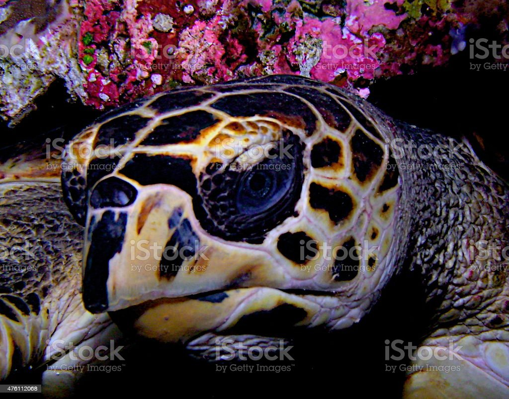 Sea Turtle Head Shot stock photo