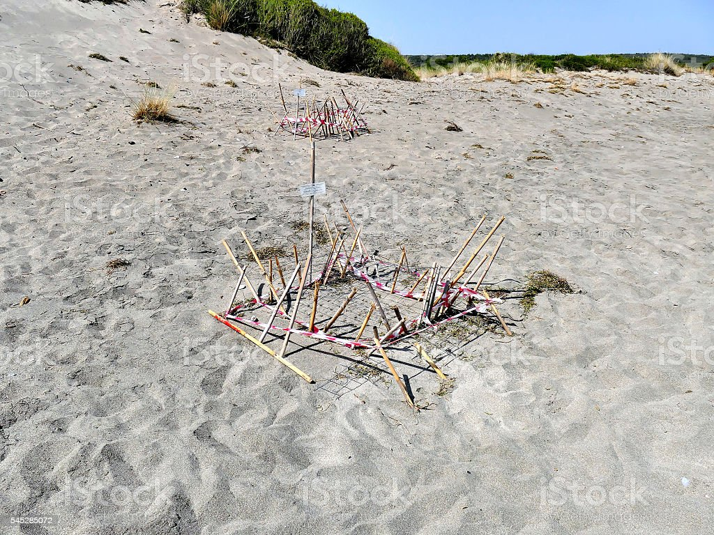 Sea turtle nests on beach in Greece stock photo