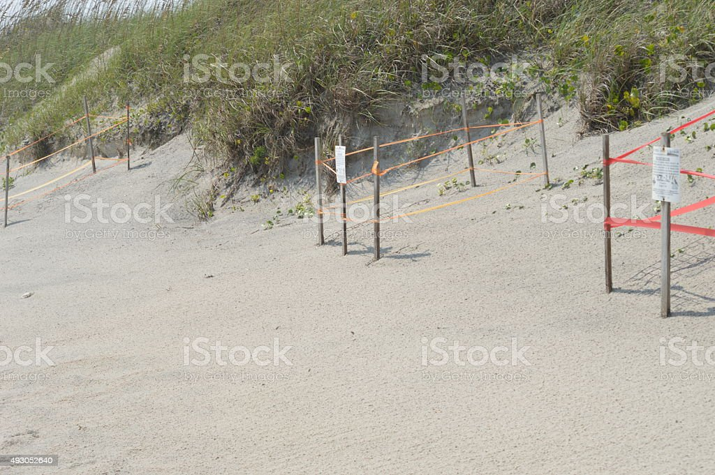 sea turtle protection stock photo