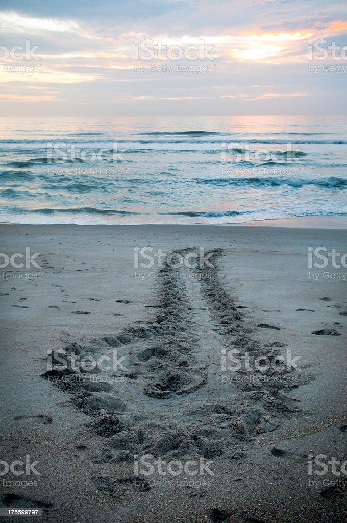 Sea turtle tracks on beach at sunrise in Florida royalty-free stock photo