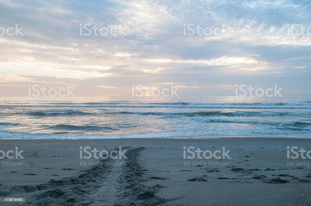 Sea turtle tracks on beach at sunrise in Florida stock photo