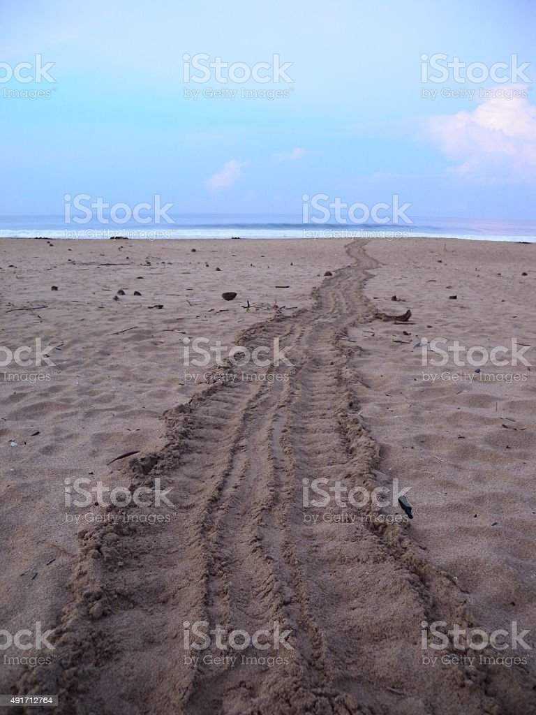 Sea turtle tracks stock photo