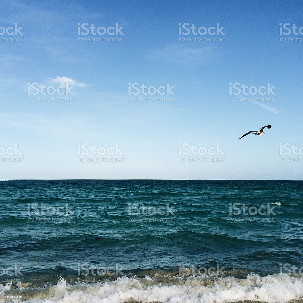 Sea under clear blue sky with a Seagull flying stock photo