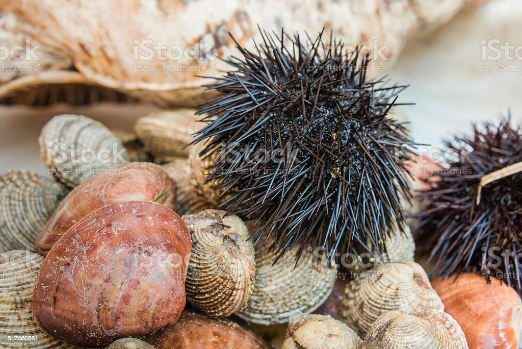 Sea Urchin on a Bed of Shelfish stock photo