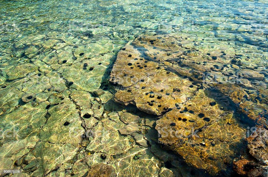 Sea Urchin stock photo