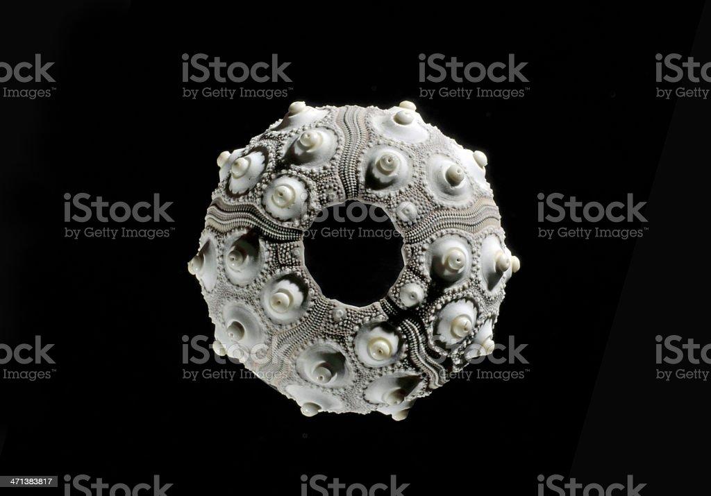 Sea urchin, regular stock photo