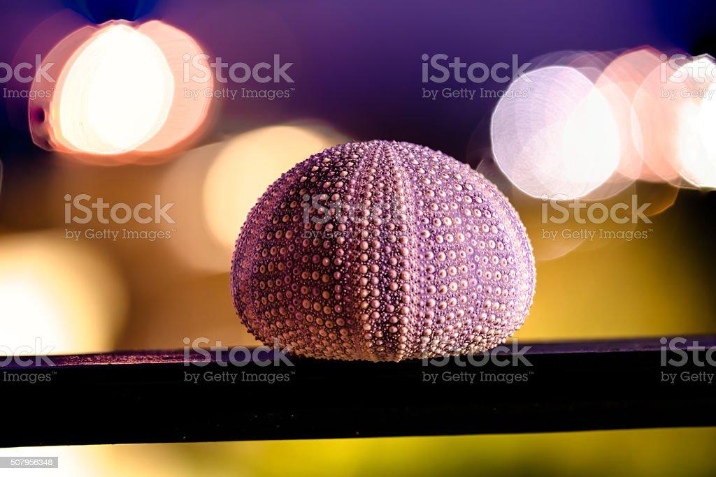 sea urchin shell at night stock photo
