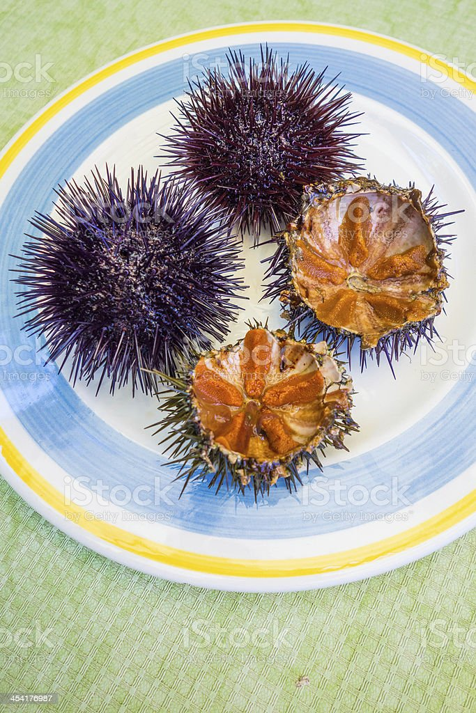 Sea Urchine Opened with Eggs royalty-free stock photo