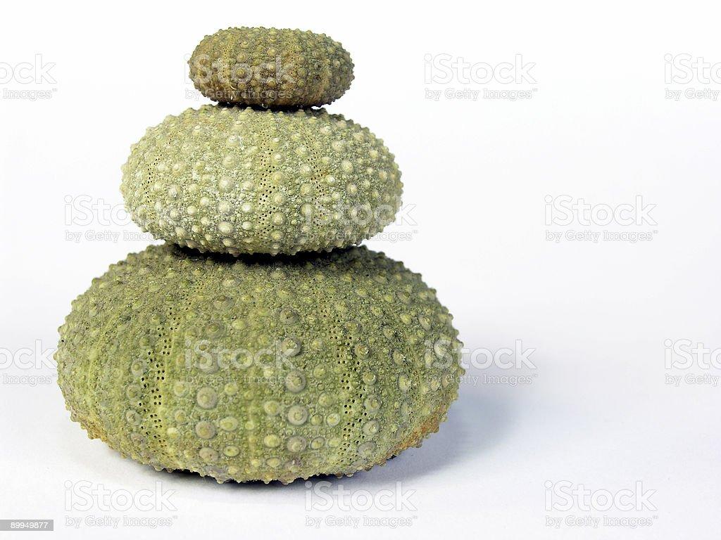 Sea Urchins on White royalty-free stock photo