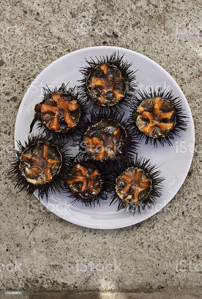 Sea Urchins stock photo