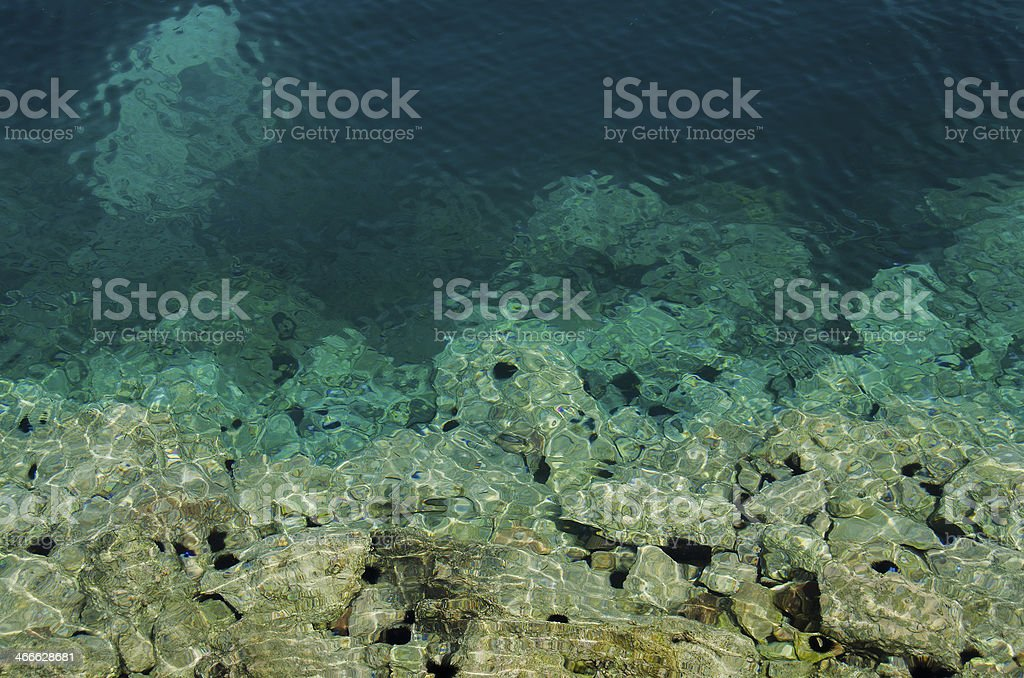 Sea urchins royalty-free stock photo