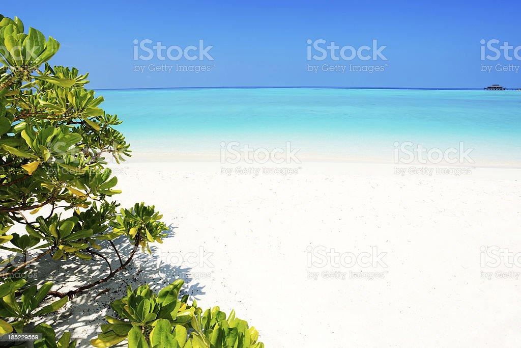 Sea view behind a plant bush. royalty-free stock photo